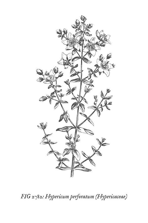 Sweeterlittlehome Com Vintage Botanical Prints Botanical Prints Wall Prints Free