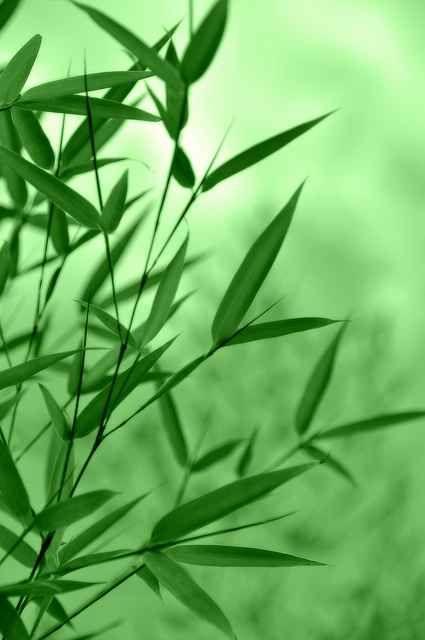 Decorare il giardino con le piante di bambù