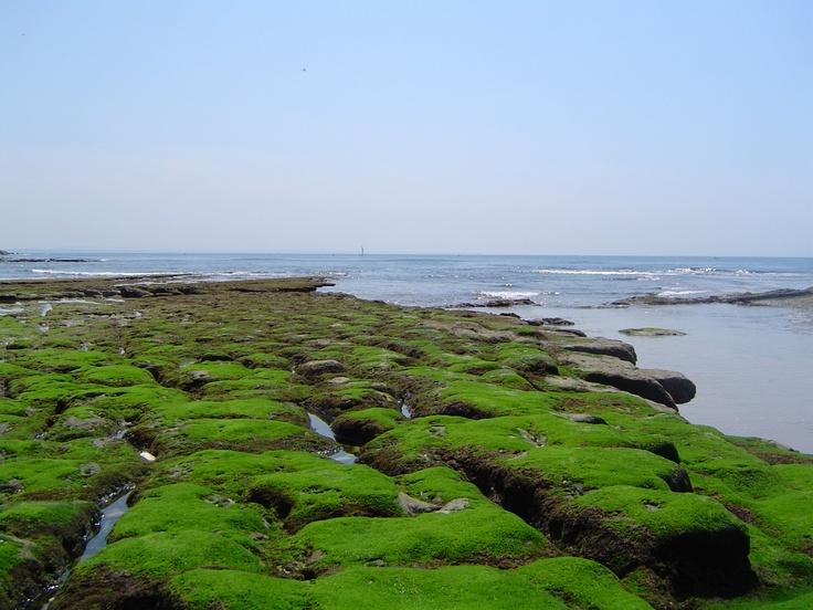 Mais uma da praia da Parede e toda a sua beleza!