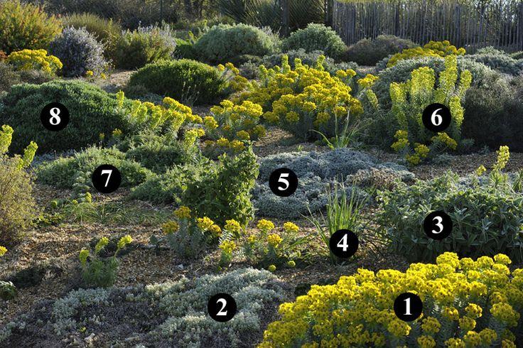 1 : Euphorbia rigida 2 : Cerastium candidissimum 3 : Phlomis x cytherae 4 : Asphodelus microcarpus 5 : Tanacetum densum subsp. amanii 6 : Euphorbia characias subsp. wulfenii 7 : Centaurea bella 8 : Lomelosia cretica 'Jeanne et Jean'