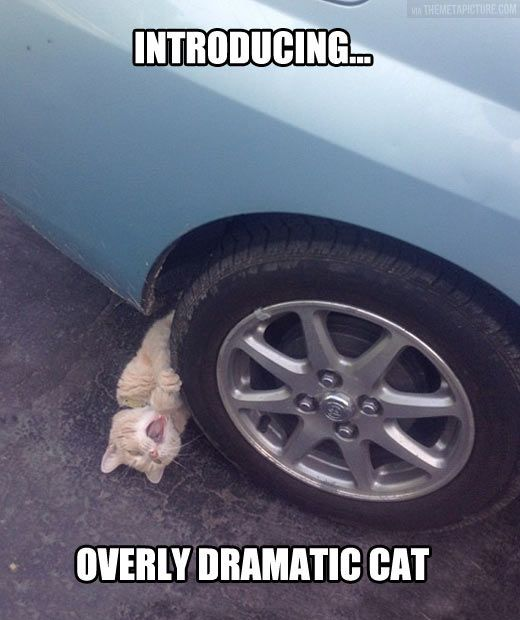 Overly Dramatic Cat...