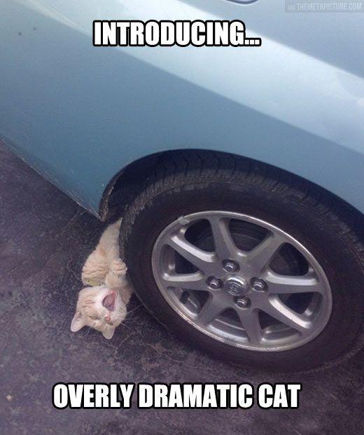 cat drama