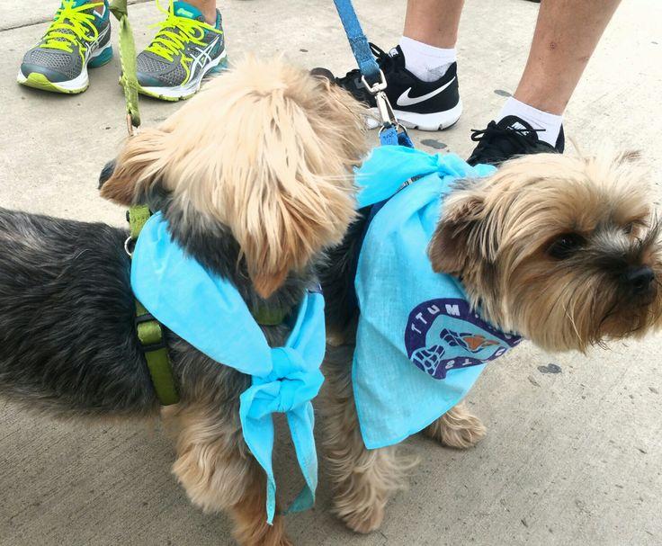 Strut Your Mutt SPCA of Texas today!! spcaoftexas