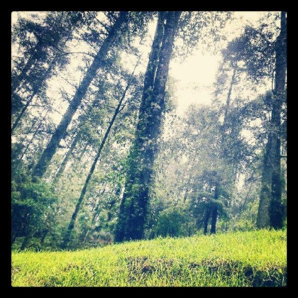 The woods. Los azufres, Michoacan, Mexico.