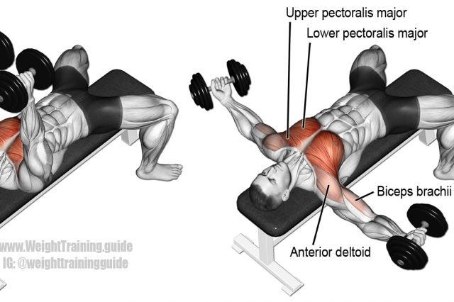 Dumbbell fly exercise