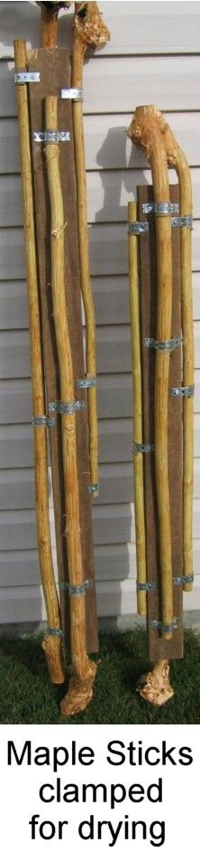 Maple sticks clamped for drying 6 ton12 months