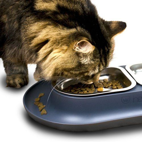 Hepper NomNom Modern Pet Bowl for Cats and Small Dogs. Keep Your Floors Clean with the Best Pet Dish for any Pet Food. ** Startling review available here  : All pet supplies