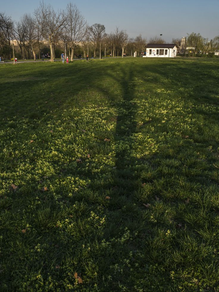 park, trees, hill, grass, people, strollers, tree, color, sky, shadows, sunset, sun, white house