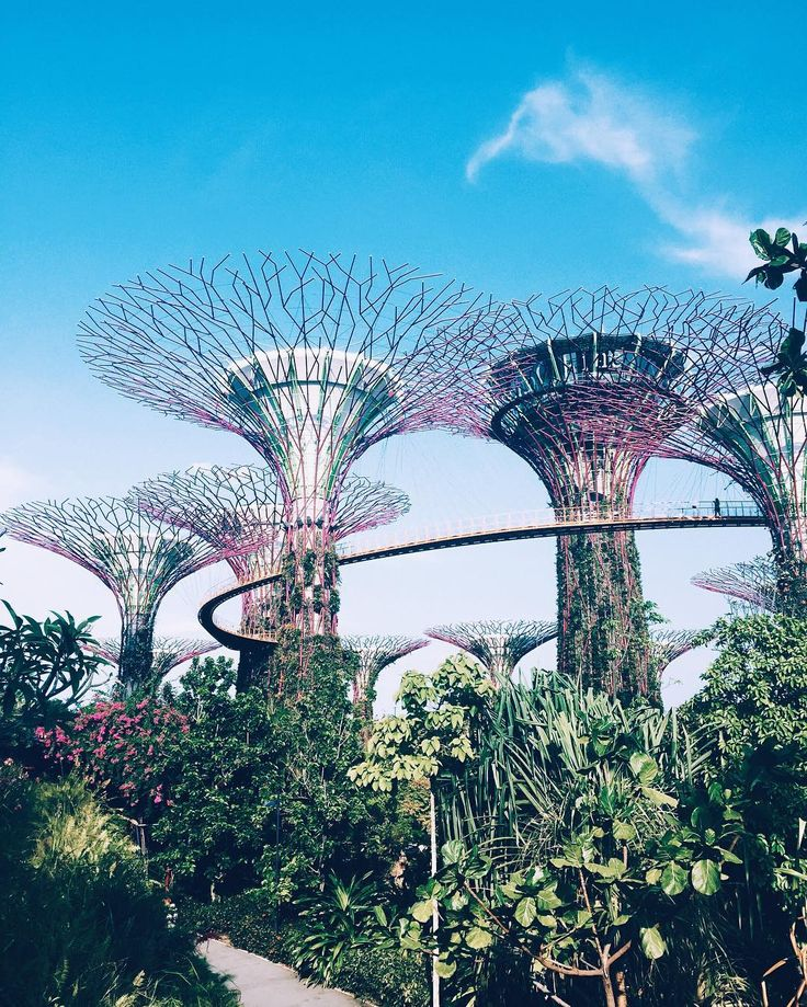 """Supertree Grove 🍀 in Singapore . . . "" Follow me on instagram @oceanspirit for more traveling pictures"