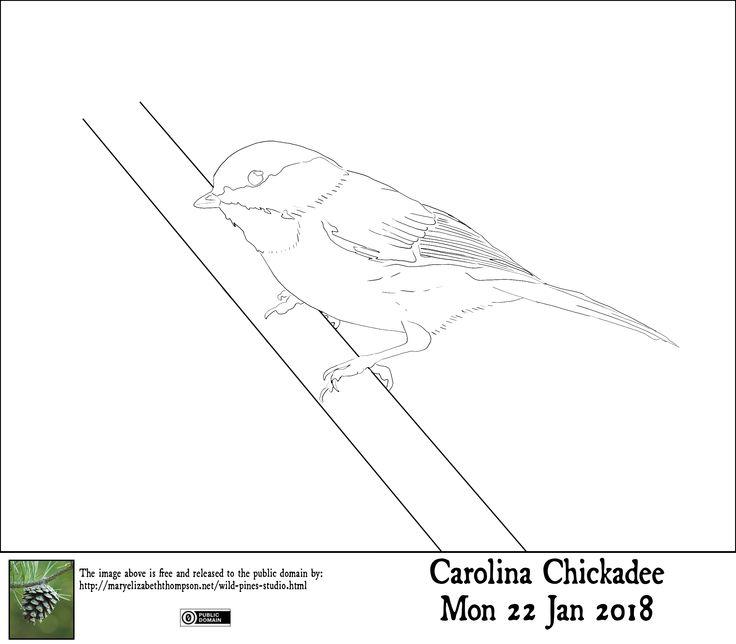 Traceable for a Carolina Chickadee