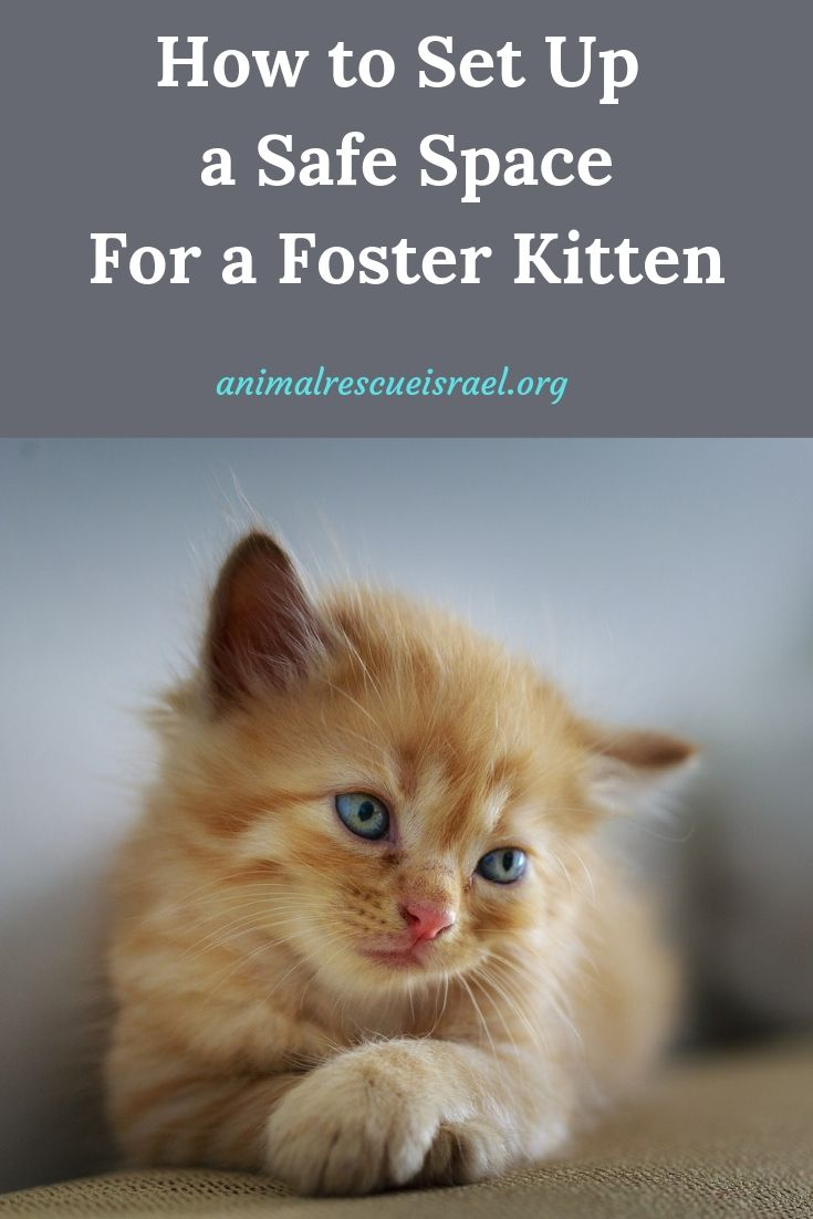Fostering A Kitten Or Any Animal For That Matter Is Nothing Short Of Life Saving The Compassion You Show In Foster Kittens Pet Sitters International Kitten