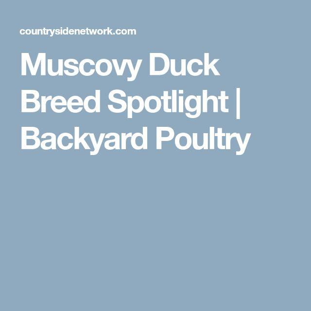 Muscovy Duck Breed Spotlight | Backyard Poultry
