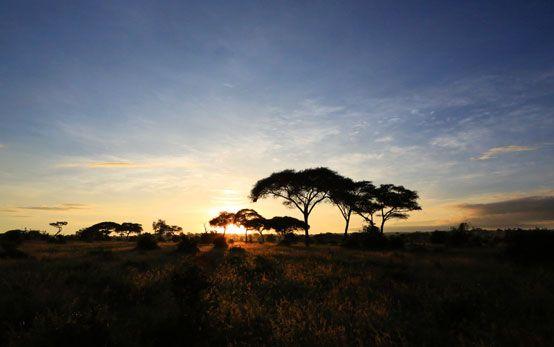 Sunrise over Tarangire National Park, Tanzania