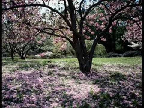 Francis Cabrel La robe et l'échelle - YouTube