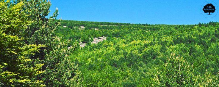 La Rioja. Está situada entre el valle del Ebro y el  Sistema Ibérico. Las formaciones propias de las cumbres son las praderas higroturbosas, los pastizales de alta montaña y las asociaciones de matorrales de altura, achaparrados por los vientos dominantes y el peso de la nieve. Además, en las zonas más altas es posible encontrar relieves de origen glaciar.