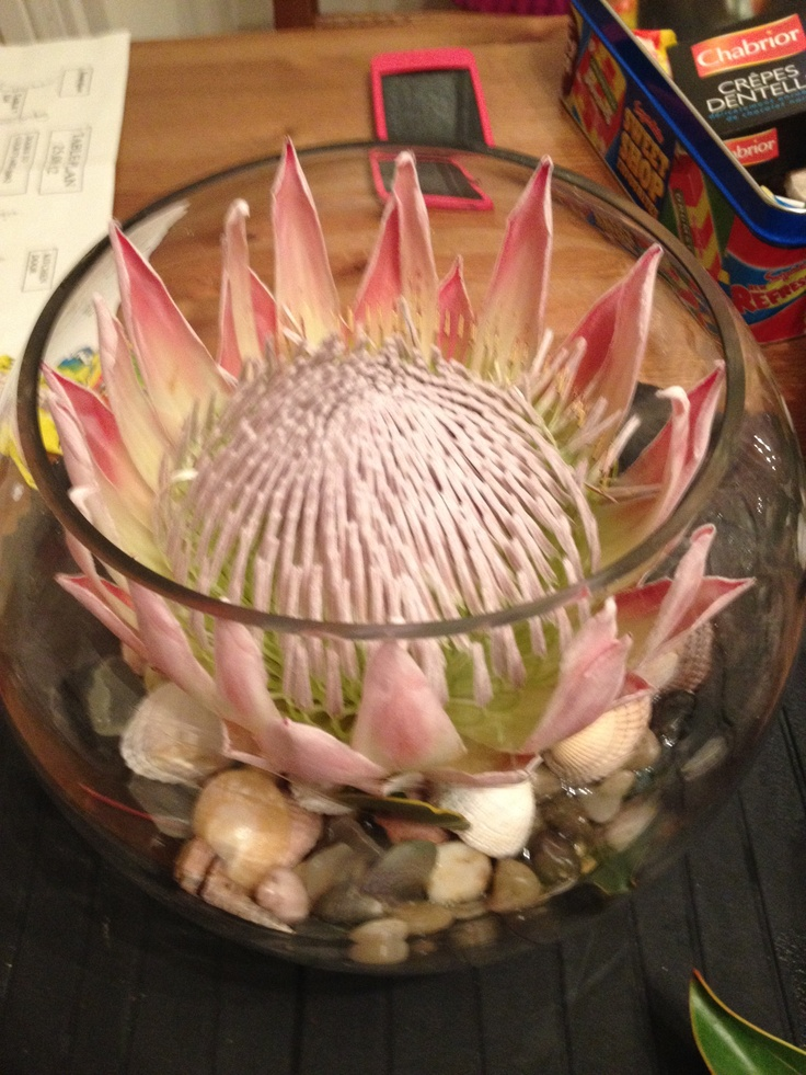 My wedding centre piece, king protea in a fish bowl on pebbles, sea glass and shells