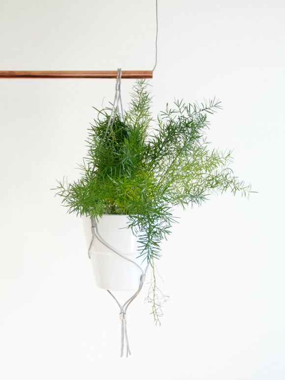 Asparagus Fern: Easy to care for and looks fabulous hanging from a modern macrame holder.