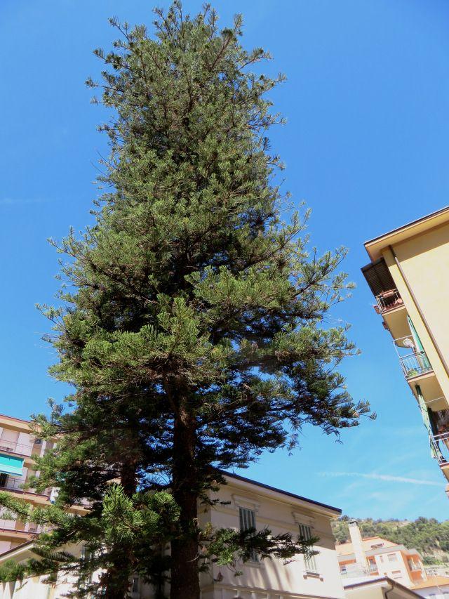 Ventimiglia (IM)  Via Asse