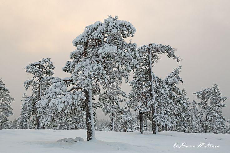 By Hannu Mällinen | Rovaniemi