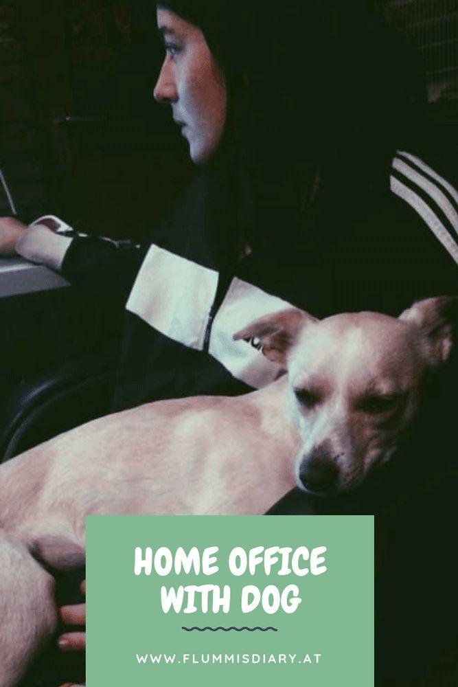 Home Office Mit Dem Hund So Klappt Es Bestimmt Flummi S Diary Hunde Hund Im Buro Hunde Und Kinder