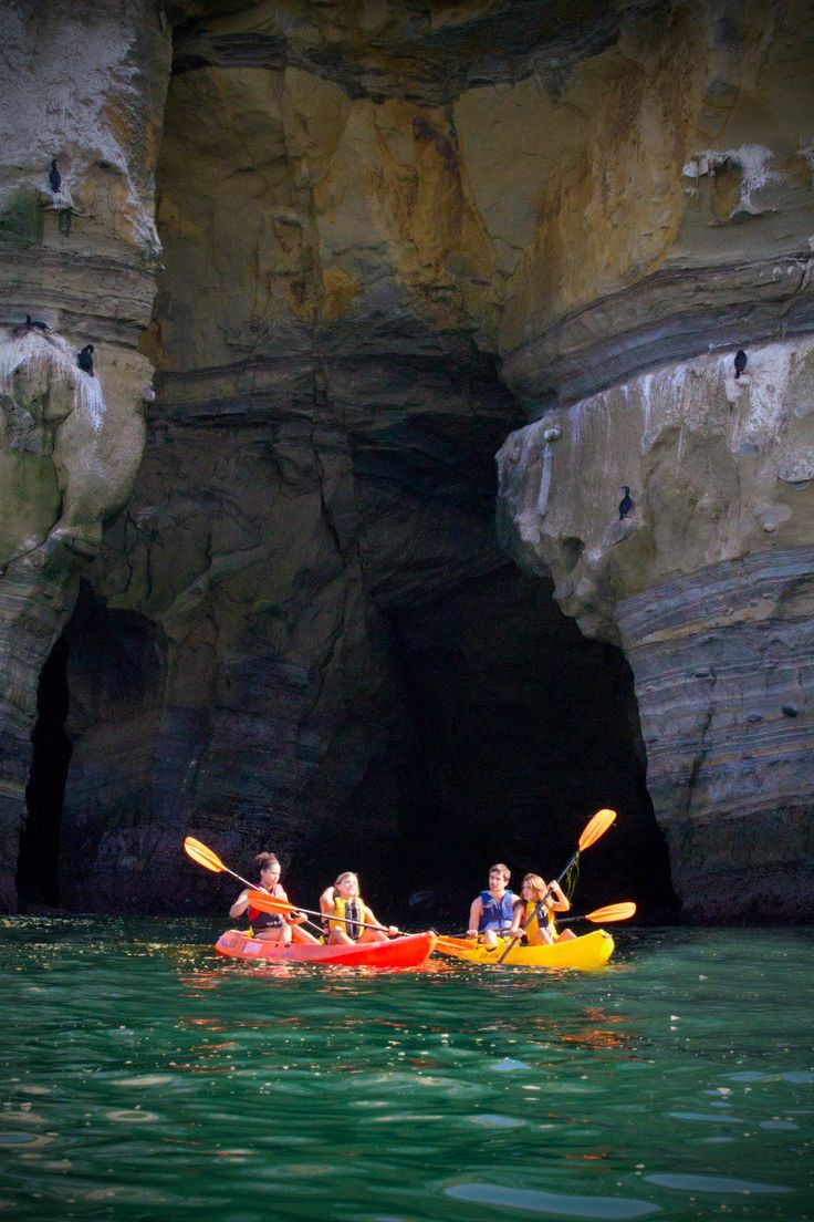 See the La Jolla, California leopard sharks via kayak while touring near the sea caves.