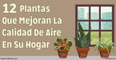 Agrega plantas es una manera simple y placentera de mejorar el aire en su hogar y trabajo con al fin de absorber la contaminación del aire. http://articulos.mercola.com/sitios/articulos/archivo/2016/09/24/plantas-domesticas-calidad-de-aire.aspx