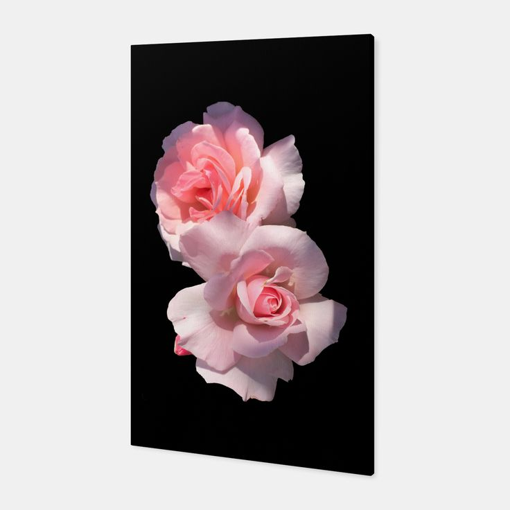 Beautiful pink Roses Canvas, Live Heroes