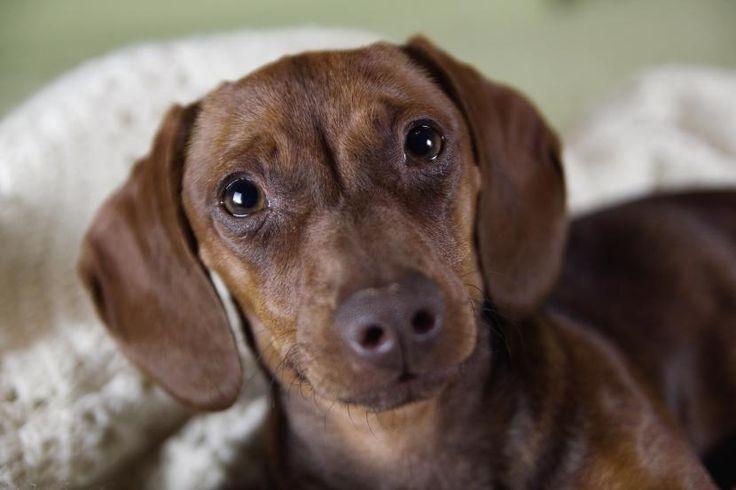 Cómo curar quemaduras en perros - http://www.mundoperros.es/curar-quemaduras-perros/