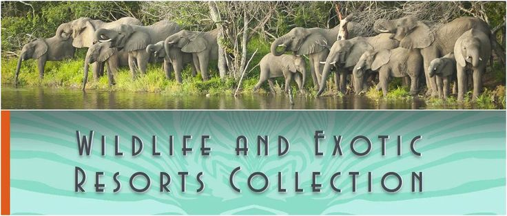 Follow Wildlife & Exotic Resorts Collection Pinterest boards for holiday pics and info  https://www.pinterest.com/jennyjarvis777