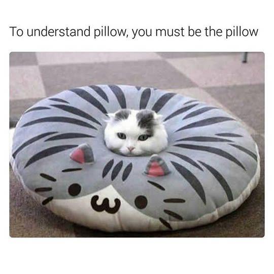 funny cat memes today, 10 pics
