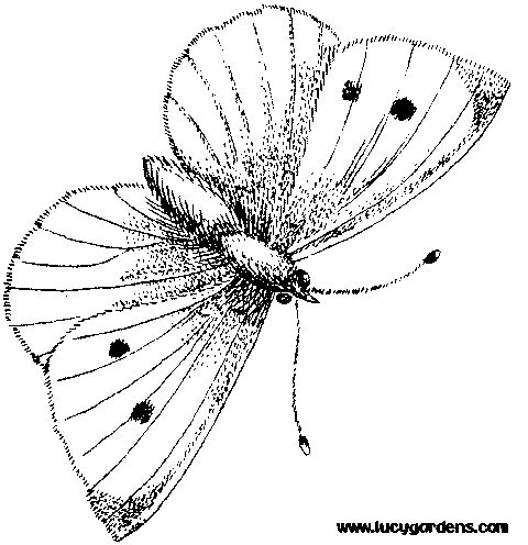 Good Butterfly Coloring Pages For Kids 97 Coloring Pages on Free
