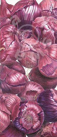 Ann Swan - Purple Onions.  Love these!