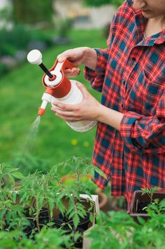 Learn how to use neem oil for plants as a natural and non-toxic pesticide in your garden.