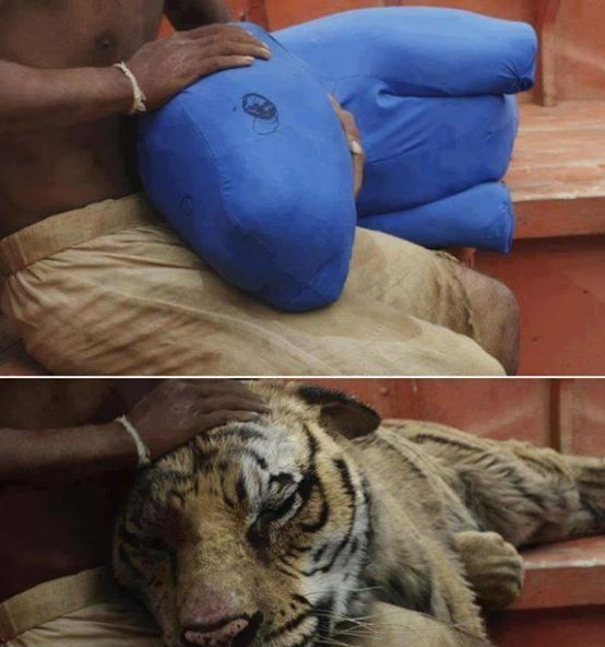 Behind the scenes on the life if pi movies pinterest for Life of pi pool scene