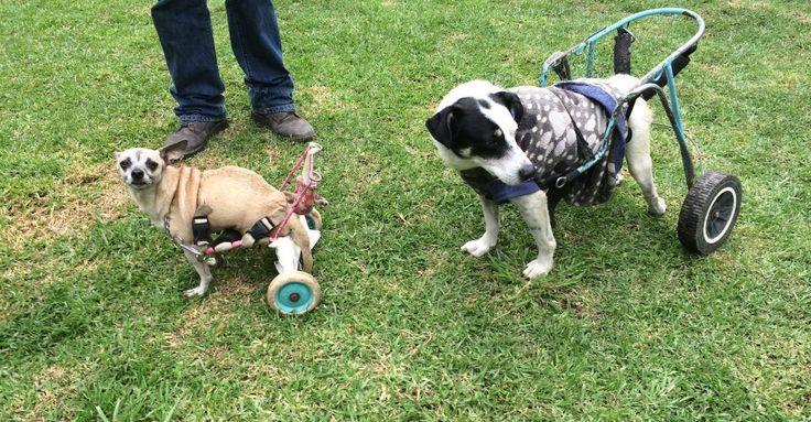 """Desde hace 10 años, en Xochimilco, Ciudad de México, existe un """"santuario"""" dedicado a adoptar, proteger y rehabilitar perros que han sido víctimas de maltratos extremos,tales como tortura, abuso sexual, que sufren enfermedades terminales y que han sido abandonados por sus dueños.Se trata deMilagros"""