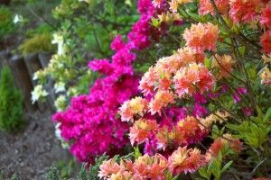 If you live on a property that is shady all day long, then you may be lamenting the fact that you can't easily grow sun-loving flowers such as daisies or