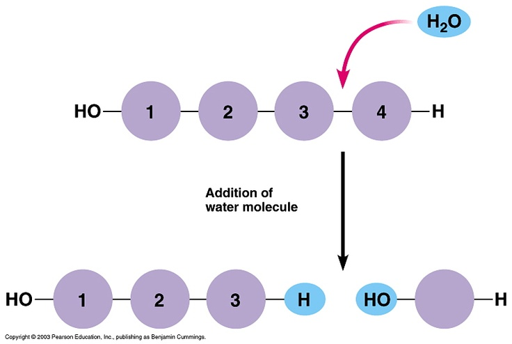 47 Best Organic Chemistry Images On Pinterest