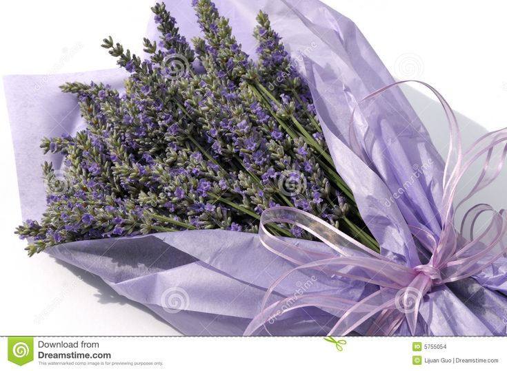 Lavender Flower Bouquet - Download From Over 45 Million High Quality Stock Photos, Images, Vectors. Sign up for FREE today. Image: 5755054
