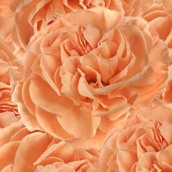 FiftyFlowers.com - Peach Carnation Flowers