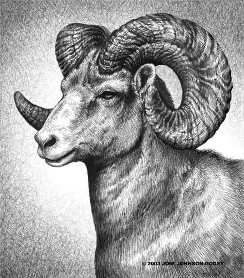 "A Big Horn Ram (Male Sheep). The sketch work done on this piece is brilliant. Would like to see a similar treatment done using the ""morphed"" female body with Ewe head."