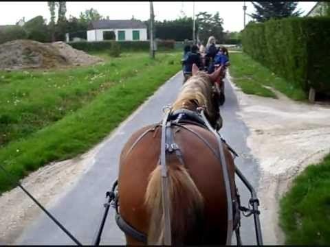 L'attelage cheval: une super façon de découvrir la Sologne