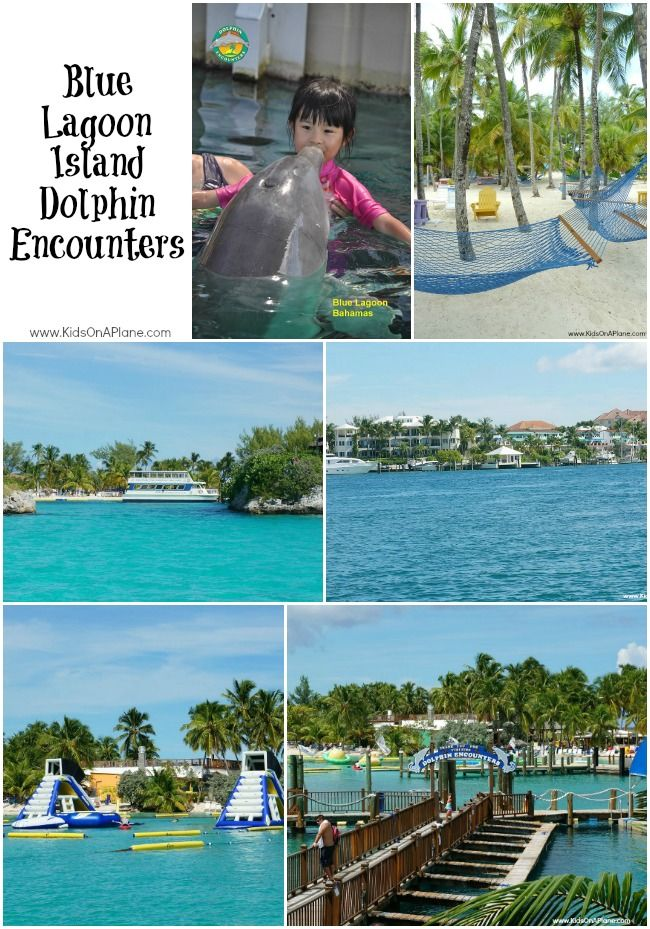 Dolphin Encounter at Blue Lagoon Island - fun family travel on a Disney Cruise Line!