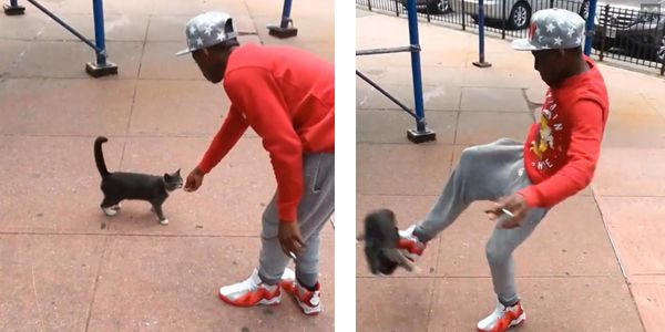 Punish Andre Robinson, Man Accused of Kicking Stray Cat in Brooklyn, NY to Full Extent of the Law