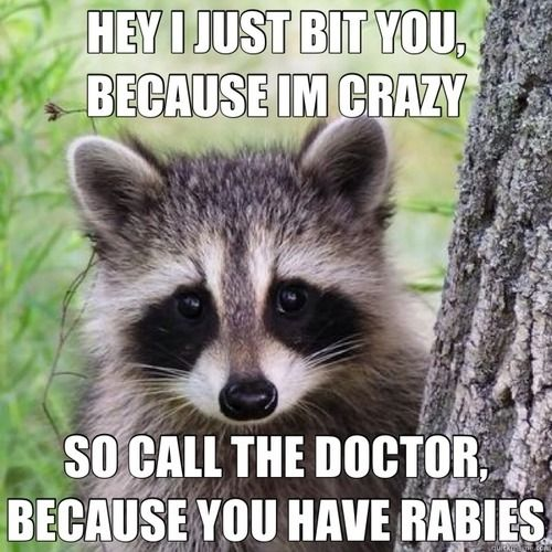 Ha!: Funny Things, The Doctors, Funny Pictures, Songs, Raccoons, Funny Stuff, Rabi, So Funny, Animal