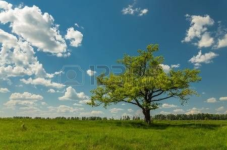 Green field and solid tree before blue sky with clouds.