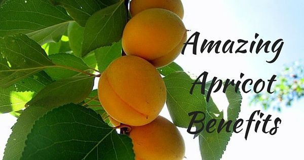 "Apricot, known as ""Khumani"" or ""Khubani"" in hindi scientifically known as Prunus armeciaca, is a nutritious fruit belonging to the Rosacea family."