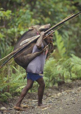 PapuaWeb: Ekologi Kamoro - Kamoro Ecology (Kal Muller, 2004)