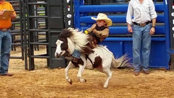 Mini Bucking Horse and a kid - How cute!