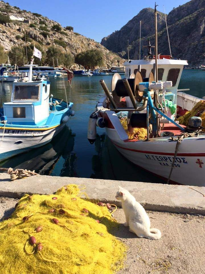 Kalymnos - the cat knows what she's waiting for!