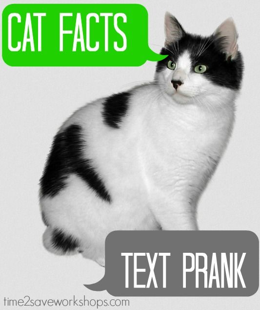 Cat Facts Prank – The best April Fool's prank I've EVER pulled!  You do it by texting from an unknown #.... My brother-in-law was really, really not expecting a subscription to cat facts to come his way - but boy did they!Cat Kittens, Funny Facts, Facts Cat, Facts April Fools, Cat Facts April, Facts Dogs, Cat Stuff, Cat Texts Thy, Cat Facts Pranks